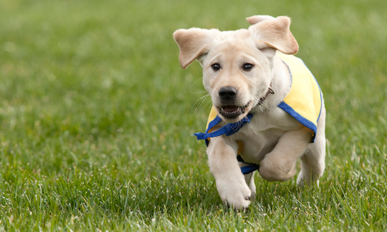 2016 Content image running puppy