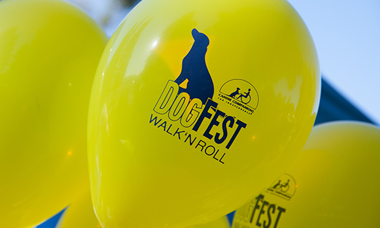Balloons with CCI DogFest logo