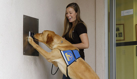 Trainer teaches dog to press door push plate with nose