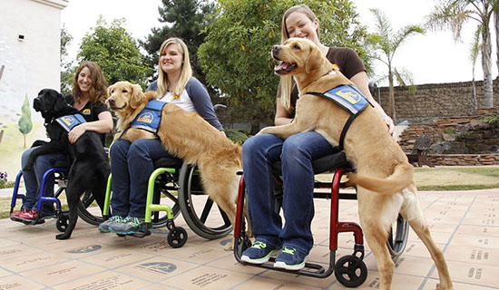Three women trainers in wheelchairs with service dogs on their laps
