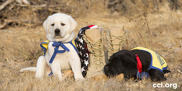 two puppies with military boots and American flag
