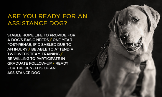 Service dog in black and white, text reads