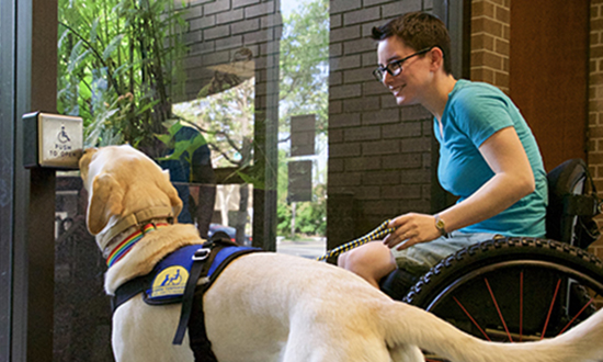 person sitting in wheelchair holding a leash to Canine Companions Service Dog who is pushing a push plate