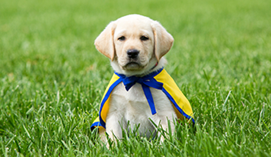 yellow puppy grass.jpg