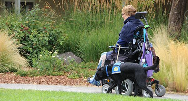 Woman in wheelchair accompanied by black service dog in garden