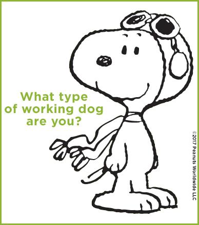 Working Dog Quiz