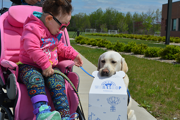 Woman in wheelchair smiles at yellow service dog holding a Build-A-Bear box in its mouth