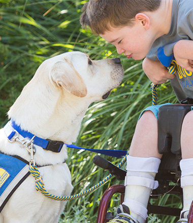 Young boy in wheelchair leans dog to kiss yellow assistance dog
