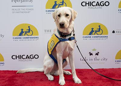 Haute Dog Chicago Puppy