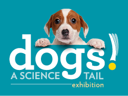 dog peeking over the word dogs - a science tail