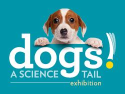 dogs exhibit image