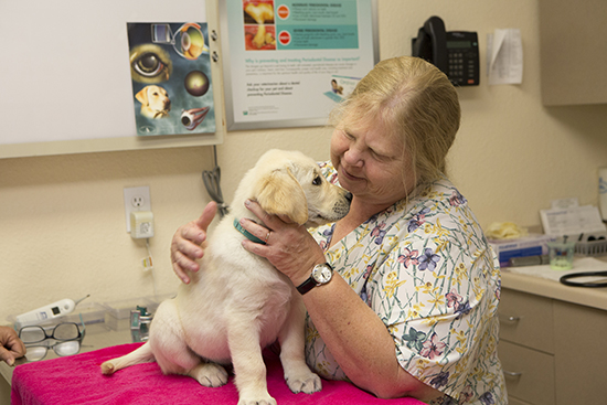 Dr. Ruth smiling at a yellow Canine Companions puppy