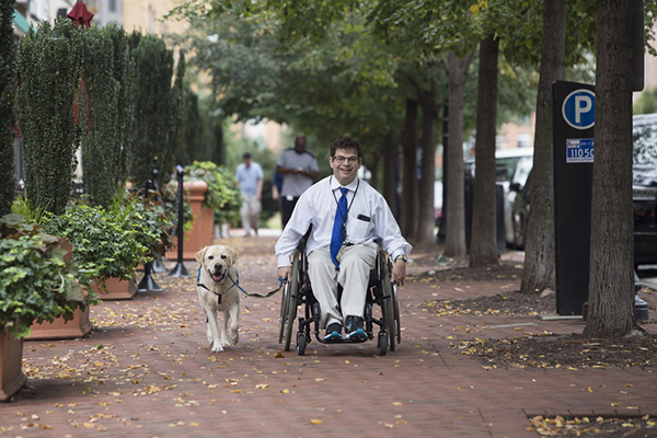 Yellow dog pulling a Ryan Honick in a wheelchair