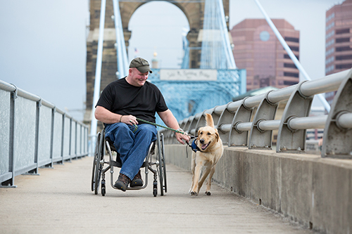 yellow dog pulling man in wheelchair