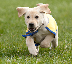 puppy running in the grass