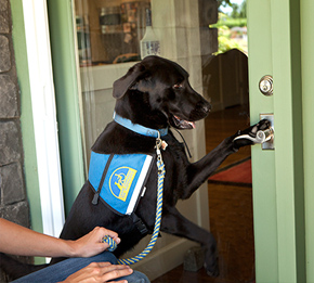black service dog opening door with paw