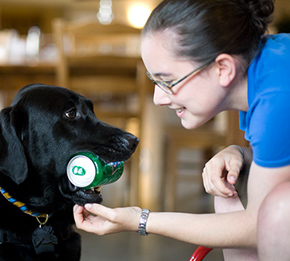 Black service dog holding soda can in mouth
