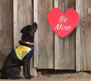 Canine Companions puppy looking at red heart that reads,