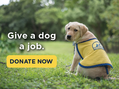 bCanine Companions puppy looking over shoulder with text that says give a dog a job, donate now.