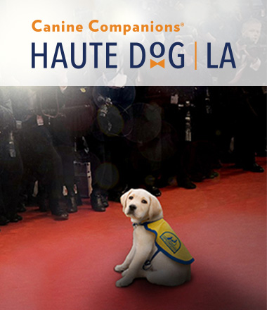 Canine Companions puppy sitting on red carpet with photographers behind it