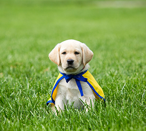 puppy grass yellow.jpg