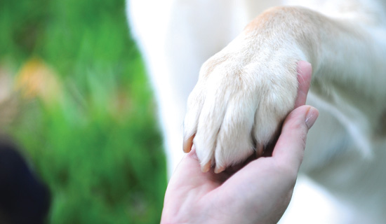 yellow dog paw shaking a human hand
