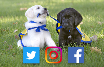 puppies in grass with social icons on image
