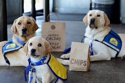 b8e0d1e21 Canine Companions for Independence and Chipotle Mexican Grill team up in  Southern California to Cause an Effect