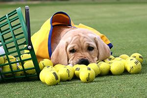 CO Golf photo