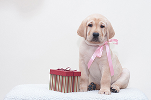 Pooches and Presents