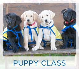 Puppy Class HP Box