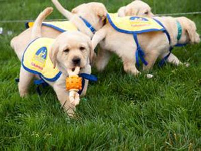 baby puppies in capes