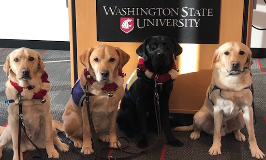 WSU Everett Event - 4 dogs