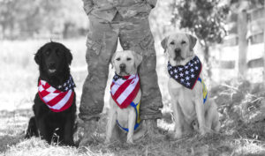 Veteran standing behind Canine Companions service dogs