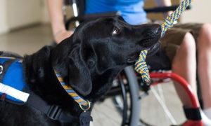 Canine Companions service dog