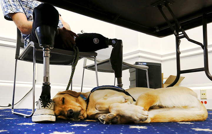Canine Companions laying under table