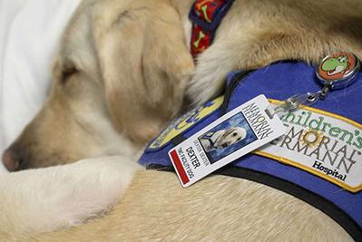 sleeping Canine Companions service dog
