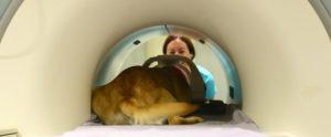 Canine Companions dog in a MRI machine