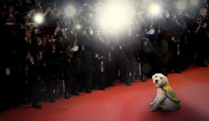 Canine COmpanions puppy sitting on a red carpet
