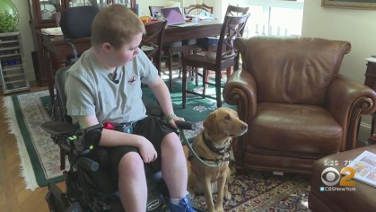 child in wheelchair with Canine Companions service dog sitting next to them