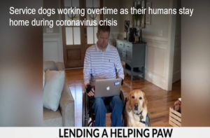 person with computer on lap and Canine Companions service dog sitting next to them