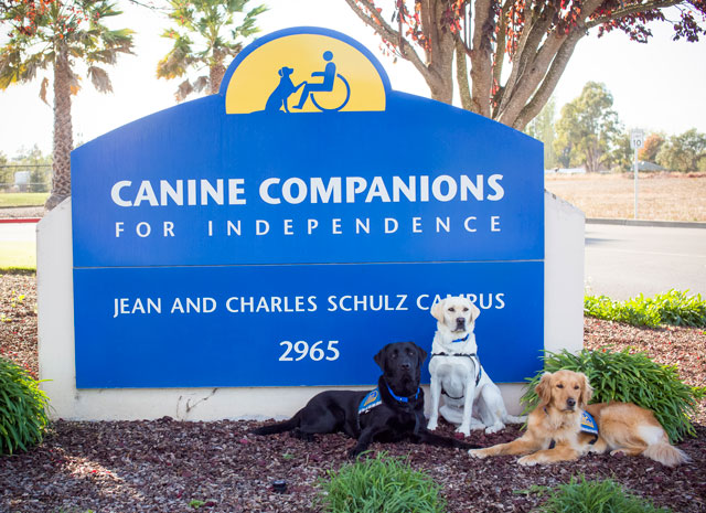 Canine Companions service dogs with campus sign