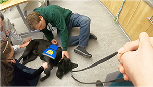 Canine Companions service dog laying on the group while people pet it