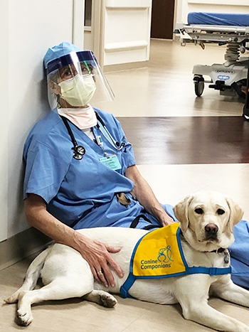 doctor sitting on floor with face mask and shield with a Canine Companions puppy laying next to them.