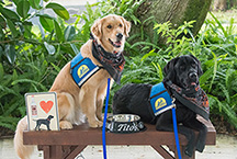 two Canine Companions service dogs on a bench
