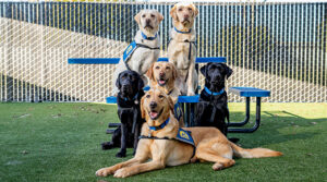 Group of Canine Companions service dogs sitting together