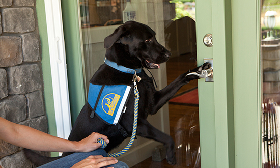 Canine Companions service dog opening a door with paw