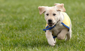 puppy running in the grass