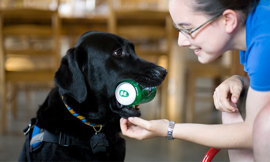 Service dog holding soda can for woman in wheelchair