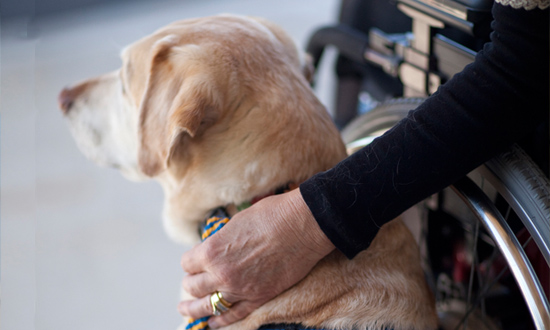 Canine Companions service dog with persons hand on their back